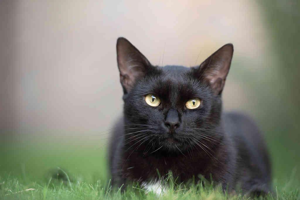 videozapisi crnih djevojaka maca